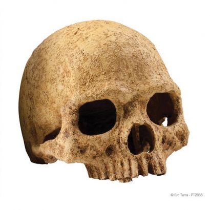 Decor Exo Terra Primate Skull Pt2855
