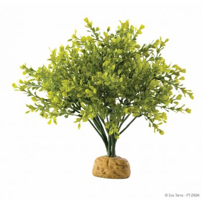 Plante Exo Terra Boxwood Bush Pt2994