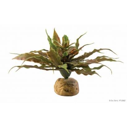 Plante Exo Terra Star Cactus Pt2982