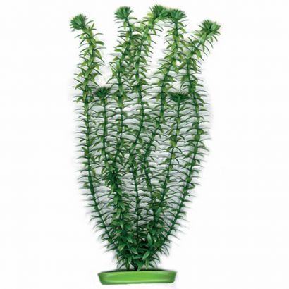 Plante Marina Anacharis 37,5 Cm Pp1503