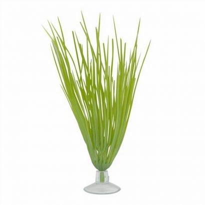 Plante Marina Betta Kit Hairgrass 12080