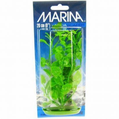 Plante Marina Cardamine 37,5 Cm Pp1505