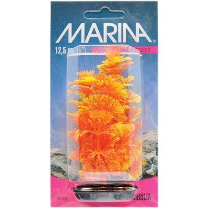 Plante Marina Color Ambulia - 20 Cm Pp832