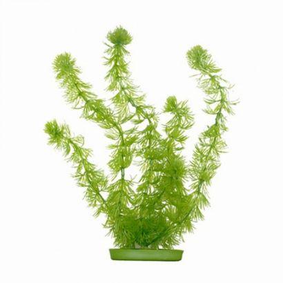 Plante Marina Hornwort - 12,5 Cm Pp512